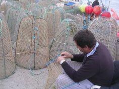 Les feines de manteniment de cada dia : Per la pesca de la sepia.... | pereguinovartfig