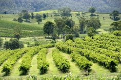 Visit up to 4 wineries - including family wineries, small boutique wineries. Choose from a wide range of quality wines and sample some of Australia's best.  http://www.oztrails.com.au/Hunter_Valley_Tours.html