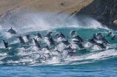 No Wave, Photo Animaliere, Bottlenose Dolphin, Humpback Whale, Aerial Images, Surfs, Ocean Life, Marine Life, Sea Creatures