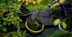 After Autumn - Winter and awaiting spring. 🌳😊 #盆景 #盆栽 #분재 #bonsai #shohin #shohinbonsai #japanese #art #tree #nature #life #feel #albek #mortenalbek  #tokonoma #toko #床 #床の間 #shohineurope