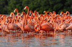 Flamingos can only eat with their heads upside down.. #teelieturner #flamingos #teelieturnershoppingnetwork  www.teelieturner.com