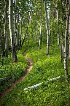 Ahhhh. Colorado single-track. Doctors Park trail outside of Crested Butte, Colorado. Doctor's Park entrance is located up Spring Creek Road (off of Taylor River Rd).  Trail takes you from Spring Creek, back to Taylor Rd.