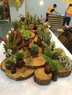 wood slabs layered with succulents etc in glass containers Garden Center Displays, Flower Shop Design, Decoration Vitrine, Garden Show, Plant Nursery, Store Displays, Succulents Garden, Flower Arrangements, Garden Design