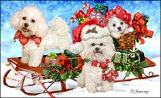"""Bichon Frise Christmas Holiday cards are 8 1/2"""" x 5 1/2"""" and come in packages of 12 cards. One design per package. All designs include envelopes, your personal message, and choice of greeting. Select the greeting of your choice from the drop-down menu above. Add your personal message to the Comments box during checkout"""