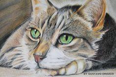 prismacolor | Prismacolor Colored Pencils Drawings Prismacolor cat (colored