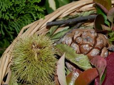 Centro decorativo otoñal con elementos naturales y reciclados. Detalle de castañas, ramas y piñas.