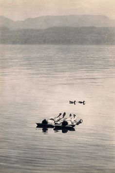 The Lake of Zurich, 1950s, by Henri Cartier-Bresson