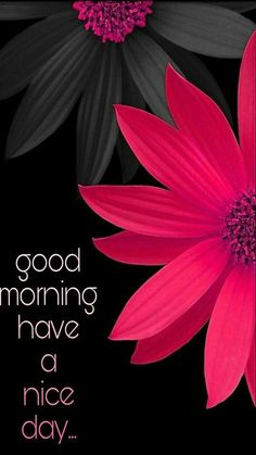 I have shared huge collection of Good Morning Images, Good Morning Pics, Good Morning Pictures & Good Morning Illustrations. Good Morning Cards, Good Morning Love, Good Morning Greetings, Good Morning Wishes, Good Day, Morning Messages, Gd Morning, Night Wishes, Good Morning Friends