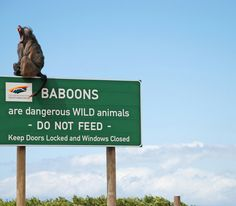 Just in case there was any doubt! Funny Animal Pictures, Funny Images, Funny Animals, Random Pictures, Wild Animals, Funny Picture Gallery, Baboon, Funny Signs, Nirvana