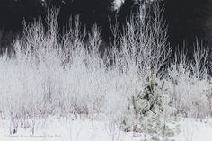 WINTER WHITE in the WOODS Maine Denmark by ElizabethThomasPhoto, Purchase on ETSY