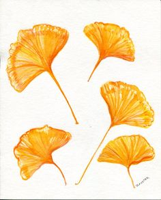 Gingko painting, Yellow Gingko Leaves, 8 x 10 Fall leaves, watercolor art, watercolors paintings original, small leaf art, autumn decor by SharonFosterArt on Etsy