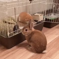 Bunny Evicted by Kitten