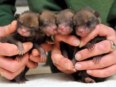 Handfuls of cuteness!