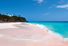 The idyllic pink sand of the Bahamas is pigmented by washed-up coral remnants