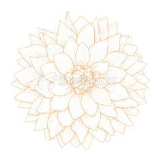 Vector dahlia flower. Royalty Free Stock Vector Art Illustration -$21