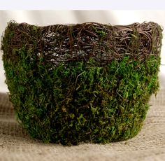 Moss Pots Wicker & Preserved Moss 6 in. Round Pots For Andrew and Ashley? Wicker Couch, Wicker Trunk, Wicker Headboard, Wicker Shelf, Wicker Bedroom, Wicker Table, Wicker Baskets, Wicker Man, Wood Planter Box