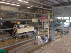 FFA barn heifer stall grooming box and tool hangar Show Cows, Show Horses, Animals For Kids, Farm Animals, Show Cattle Barn, Stall Decorations, Showing Livestock, Showing Cattle, Show Steers