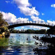 O Parque Ibirapuera é o mais importante parque urbano da cidade de São Paulo. O parque é administrado pela Secretaria do Verde e Meio Ambiente da Prefeitura de São Paulo, contudo, dentro do parque há inúmeros museus, auditórios, bienal e outros espaços administrados por fundações ou outras secretarias municipais ou estaduais. Foto: @georgecaetano