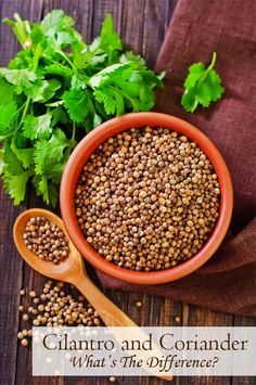 What is the difference between cilantro and coriander? • Curious Cuisiniere