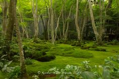 The magical moss garden of the Gio-ji Temple (祇王寺) in Sagano, Kyoto!