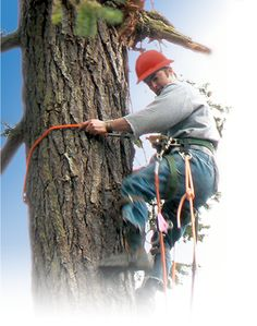 If you are looking for Tree Service in hurst? you just find a good company that provide Tree Removal and Tree Trimming in Hurst, Call us for your free estimate! http://expresstreemaster.com/tree-service-hurst/