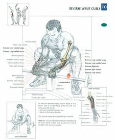 Imgur Post - Imgur Gym Workouts, At Home Workouts, Fitness Exercises, Forearm Workout, Forearm Training, Muscle Anatomy, Bodybuilding Workouts, Bodybuilding Plan, Gym Time