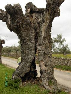 El Ocaso del árbol
