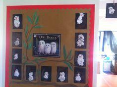 Owl babies classroom display