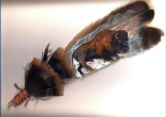 Buffalo Painted Feather Native American Pictures, Native American Crafts, American Indian Art, Deer Pictures, Pictures To Paint, Art Pictures, Tribal Feather, Feather Art, Easy Paintings