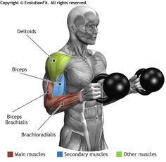Build bigger biceps with this one trick BICEPS - CURL HAMMER KETTLEBELL