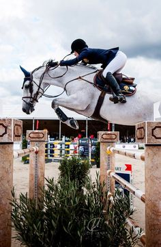 Jessica Springsteen & Cynar – Art Of Equitation Cute Horses, Horse Love, Horse Girl, Beautiful Horses, Equine Photography, Animal Photography, Landscape Photography, Horse Photos, Equestrian Outfits