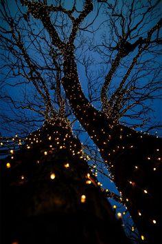 Small tree aesthetic New Ideas