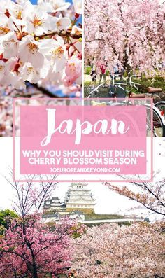 Everything you need to know about planning a vacation to Japan during the spectacular cherry blossom season: http://toeuropeandbeyond.com/why-you-should-visit-japan-during-cherry-blossom-season/ #Japan #travel