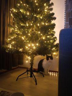 The best present for Christmas http://ift.tt/2gvvMpu
