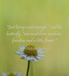 Just living is not enough, said the butterfly, one must have sunshine, freedom and a little flower.