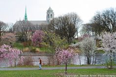 sacred heart cathedral in the background, cherry blossoms in Branch Brook Park in fore ground. newark nj - Google Search