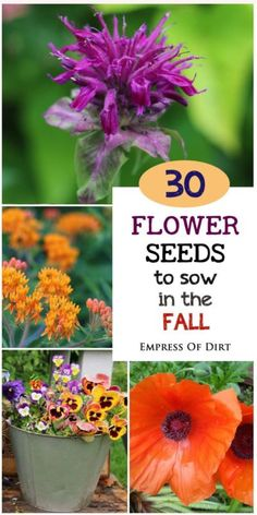 Want to get a jump start on spring blooms? There are many flowering plants you can sow from seed as the weather gets cooler in the fall. After a winter chill, they will resume growing in the spring....