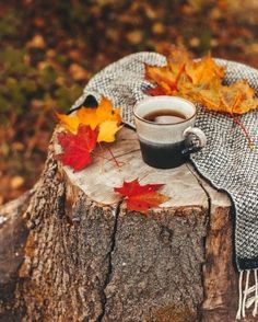 Autumn coffee Autumn Coffee, Autumn Cozy, Coffee Cozy, Coffee Time, Fall Winter, Good Morning Coffee, Tea Time, Fall Pictures, Christmas Pictures