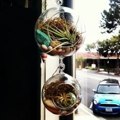Connecting terrariums at Oddyssea