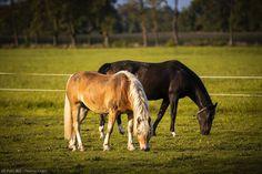 Facebook Photos, Horses, Animals, Animales, Animaux, Animal, Animais, Horse
