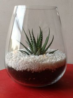 Terra vase Purchase a plant, white gravel and vase. Take the plant out of its planter and place in the vase. Add the gravel and enjoy your new terrarium.