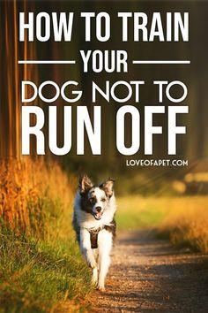 Dog Training Techniques, Dog Training Videos, Puppy Training Tips, Training Your Puppy, Brain Training, Potty Training, Service Dogs, Dog Behavior, Goldendoodle
