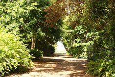 Fairchild Tropical Botanic Garden > Wedding & Private Rentals > Wedding Ceremonies & Receptions
