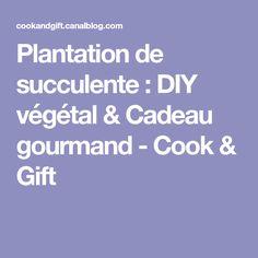 Plantation de succulente : DIY végétal & Cadeau gourmand - Cook & Gift