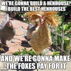 We're gonna build a hen house. I build the best hen houses, and we're gonna  make the foxes pay for it.