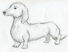 Pencil drawing for beginners easy pencil drawings images artdrawing ideas in 2018 Easy Pencil Drawings, Pencil Drawing Images, Pencil Drawings Of Flowers, Pencil Drawings Of Animals, Pencil Drawing Tutorials, Drawing Sketches, Dog Sketches, Drawing Ideas, Drawings Of Dogs