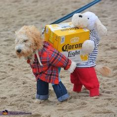 Vania: My goldendoodle Luna and her pal getting ready to start happy hour on the beach! I got inspired by all the costumes of dogs carrying stuff, and wanted to make...