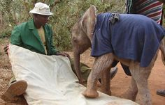 Meet the Elephant Whisperer Who Has Cared for 180 Orphaned Elephants in the Past 26 Years | One Green Planet