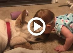 The little girl adores the dog, and she gives him kisses. The dog has a cute response Dog Bowls, Little Girls, Children, Kisses, Dogs, Hungary, Young Children, Toddler Girls, Boys