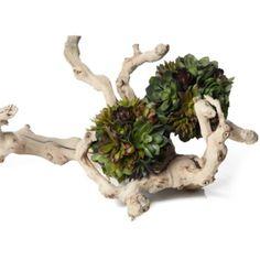 Succulent Ball from Z Gallerie